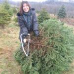 I Love Christmas Trees!