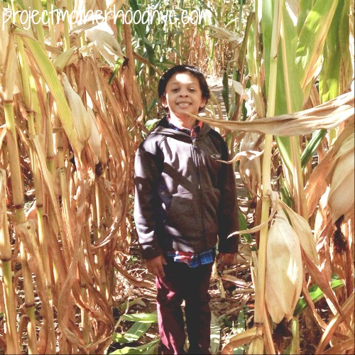 Corn-maze-fun!